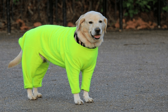 Dog in green jumper